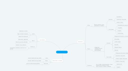 Mind Map: Cuentas de balance o real