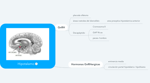 Mind Map: Hipotalamo