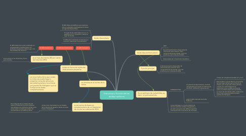 Mind Map: Estructura y función de los ácidos nucleicos