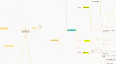 Mind Map: ESTRUTURA DE ECOSSISTEMA