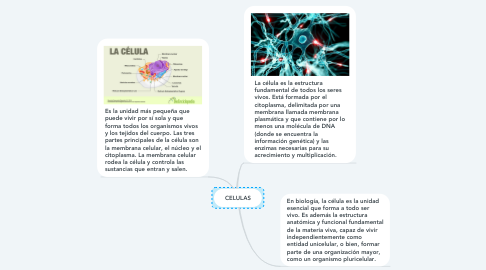 Mind Map: CELULAS