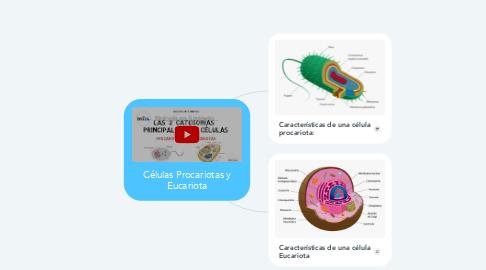 Mind Map: Células Procariotas y Eucariota