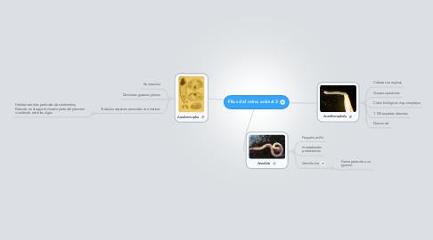 Mind Map: Filos del reino animal 2