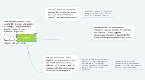 Mind Map: Muscoli