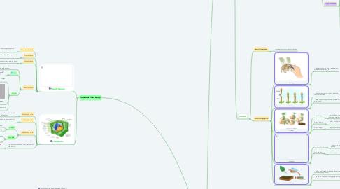 Mind Map: Plants Unit