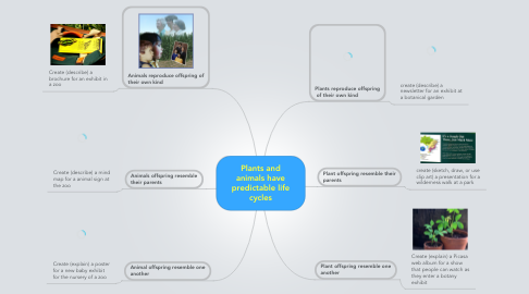Mind Map: Plants and