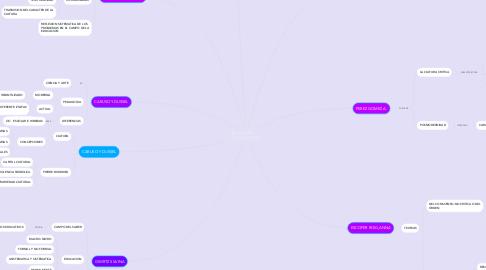 Mind Map: PEDAGOGIA       Y EDUCACION