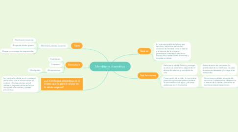 Mind Map: Membrana plasmática