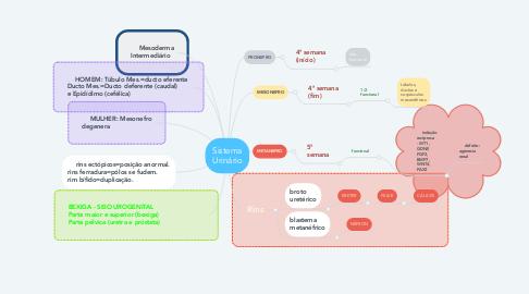 Mind Map: Sistema Urinário