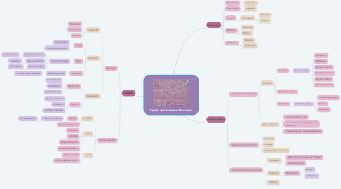 Mind Map: Tejido del Sistema Nervioso