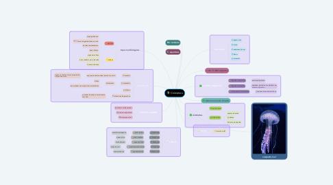 Mind Map: Cnidários