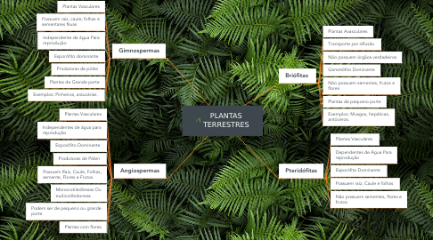Mind Map: PLANTAS TERRESTRES