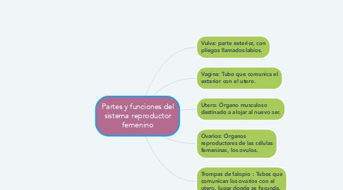 Mind Map: Partes y funciones del sistema reproductor femenino