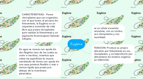 Mind Map: Euglena