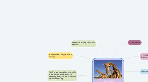 Mind Map: GIRAFFES