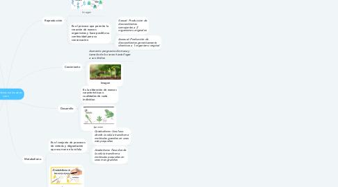 Mind Map: Características de los seres vivos