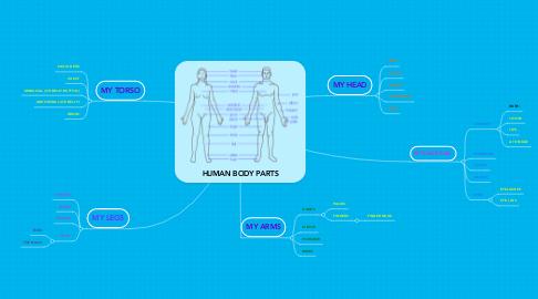 Mind Map: HUMAN BODY PARTS