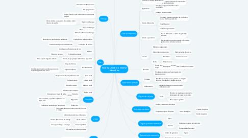 Mind Map: Sistema Urinário e Genital Masculino