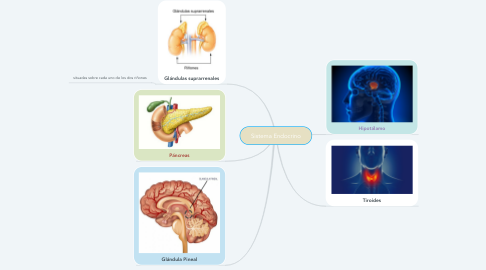 Mind Map: Sistema Endocrino