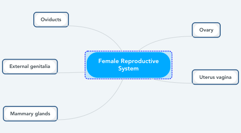 Mind Map: Female Reproductive System