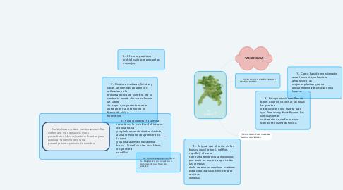 Mind Map: EL BERRO