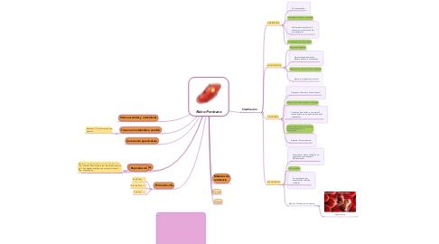 Mind Map: Reino Protozoo