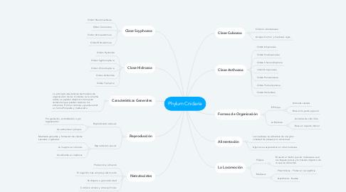 Mind Map: Phylum Cnidaria