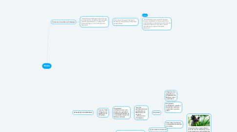Mind Map: PESCA
