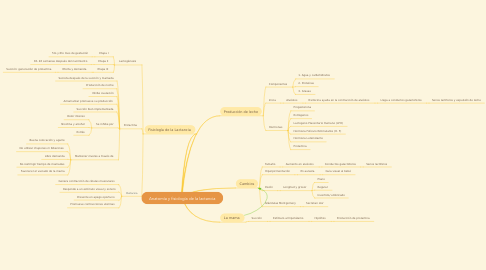 Mind Map: Anatomía y fisiología de la lactancia
