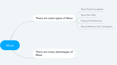 Mind Map: Musa
