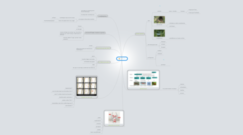 Mind Map: Spinnen