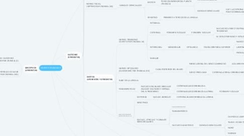 Mind Map: NERVIOS CRANEALES