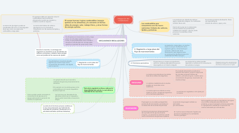 Mind Map: Integración del metabolismo