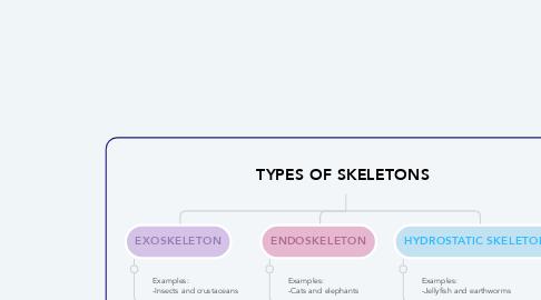 Mind Map: TYPES OF SKELETONS