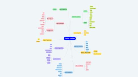 Mind Map: Anatomia Humana