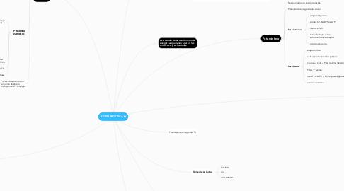 Mind Map: BIOENERGÉTICA