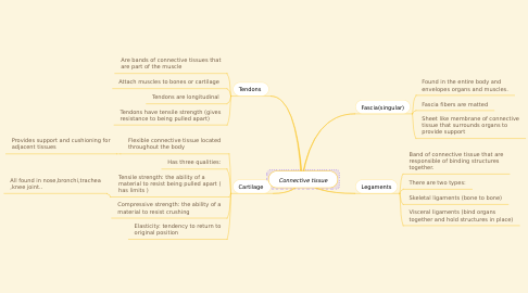 Mind Map: Connective tissue