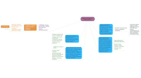 Mind Map: Sistema cardiovascular, arterial y venoso.