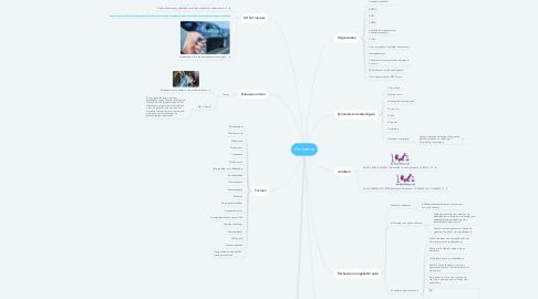 Mind Map: Omkatten