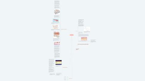 Mind Map: Nitric Oxide