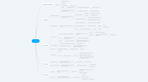 Mind Map: Tejidos