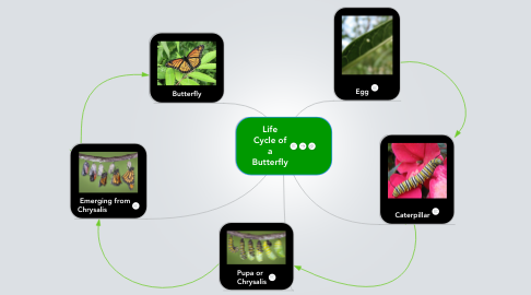 Mind Map: Life Cycle of a Butterfly