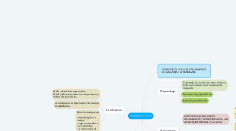 Mind Map: Organización Cortical