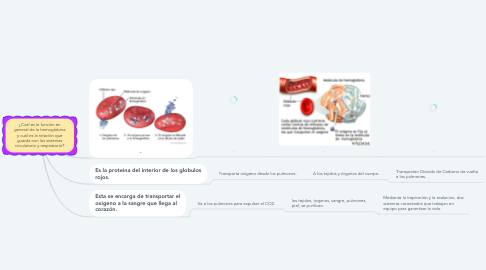Mind Map: ¿Cuál es la función en general de la hemoglobina y cuál es la relación que guarda con los sistemas circulatorio y respiratorio?