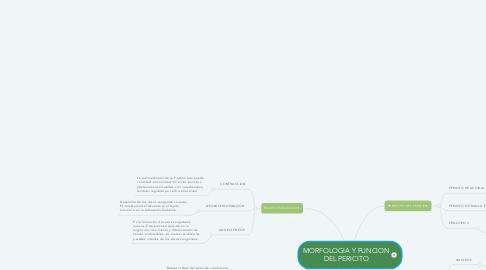 Mind Map: MORFOLOGIA Y FUNCION DEL PERICITO