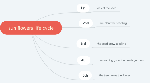 Mind Map: sun flowers life cycle