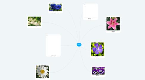 Mind Map: Квіти