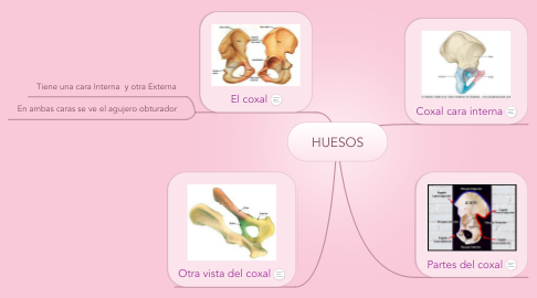 Mind Map: HUESOS