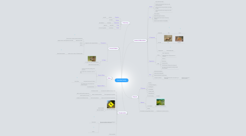 Mind Map: Cervidae Family