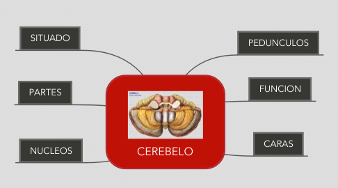 Mind Map: CEREBELO